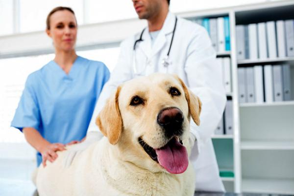 veterinarny-vrach